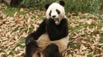 china, oso panda