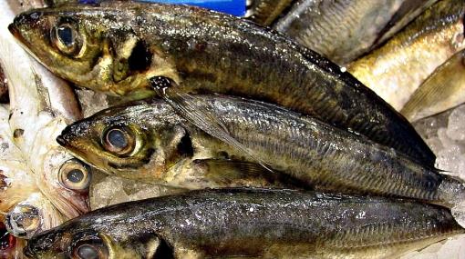 Pescados, Alimentación, Ministerio de la Producción,  Villa El Salvador