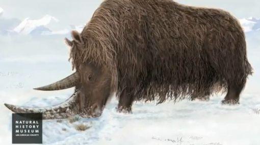 Especies en extinción, Fauna, Descubrimiento científico, Restos fósiles