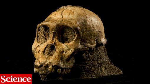 Australopithecus sediba, el ancestro que modificaría el ár