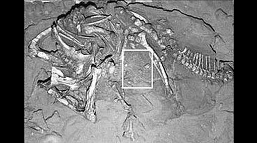 Dinosaurios, Restos fósiles, Plesiosaurio