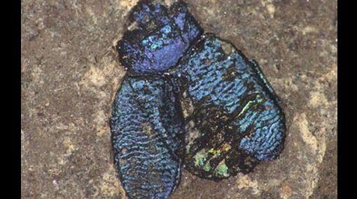Estados Unidos, Estudios científicos, Restos fósiles
