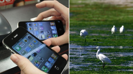 Apple, Greenpeace, RIM, Medio ambiente, Ecologa, HP