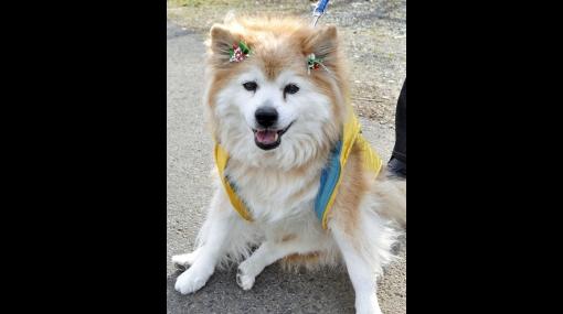 Japón, Récord Guinness, Perros, Animales, Curiosidades, Animales Curiosos