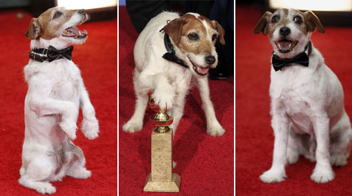 Uggie,  Uggie The Dog