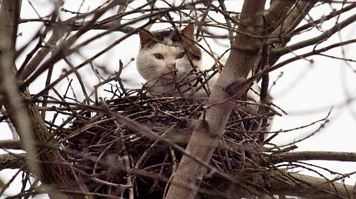 Especies en peligro de extinción, Fauna, Gatos
