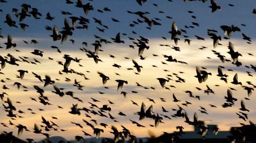 Aves, Estados Unidos,  Torres de telecomunicaciones