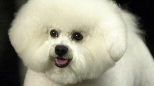 EE.UU, Mascotas, Perros, Microchips