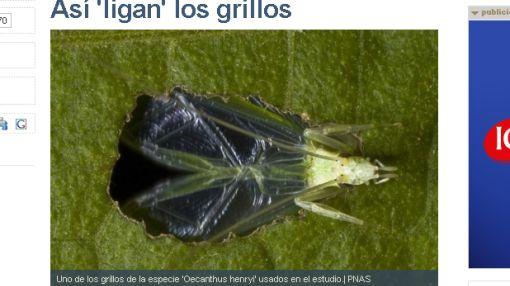 Insectos, Canto, Grillos