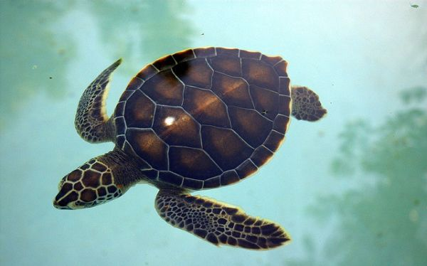Tortugas marinas y focas del Mediterrneo en peligro de extincin