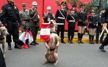 Esta es la Unidad Canina que promete acaparar las miradas en la Parada
