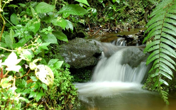 Especies en peligro de extinción, Zona Reservada Río Nieva, Reserva Abra Patricia-Alto Nieva, AZE, Alianza Cero Extinción