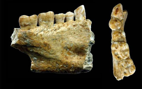 Odontología, Eslovenia, Neolítico