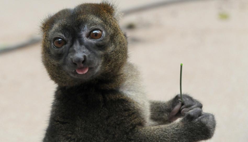 Especies en peligro de extinción, UICN, Especies amenazadas,  Las 100 especies más amenazadas,  Especies endémicas