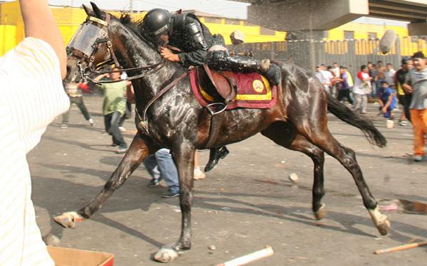 La Parada: tras muerte de caballo defensores de animales piden desactivar Policía Montada