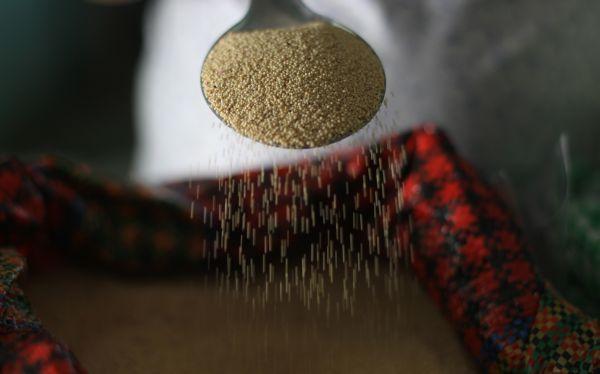 Valor nutritivo de la quinua será reconocido el 20 de febrero por la ONU