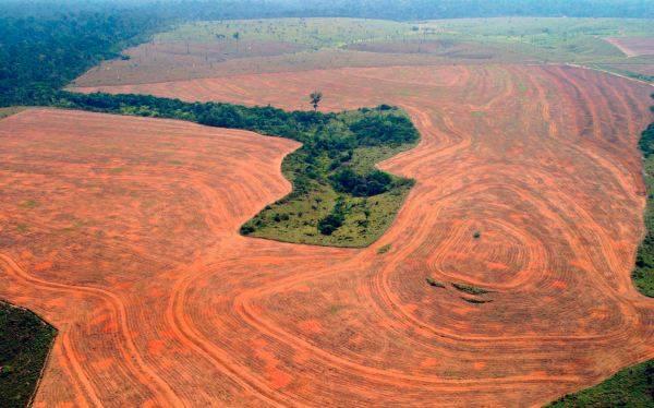 Brasil: destruyen 1.206 kilómetros cuadrados de selva amazónica en cuatro meses