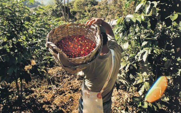 La selva de Puno: conoce el hogar de uno de los mejores cafés del mundo